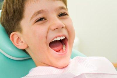 строение и назначение зубов